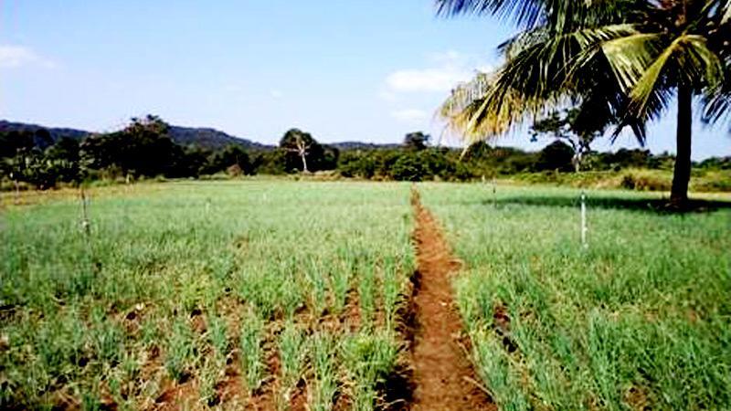 Seasonal crops