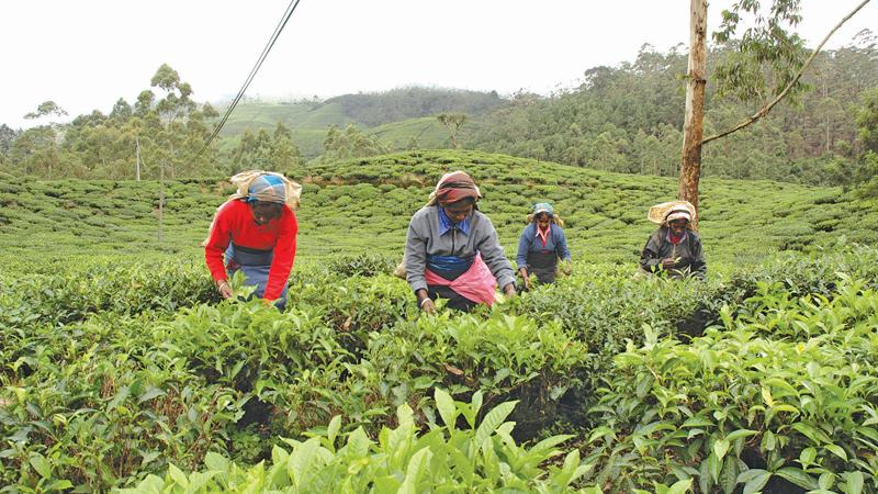 There was an improvement in tea auction prices during the latter part of the financial year .
