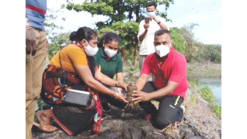 People plant a tree