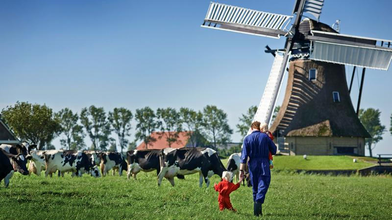 A farmland in the Netherlands