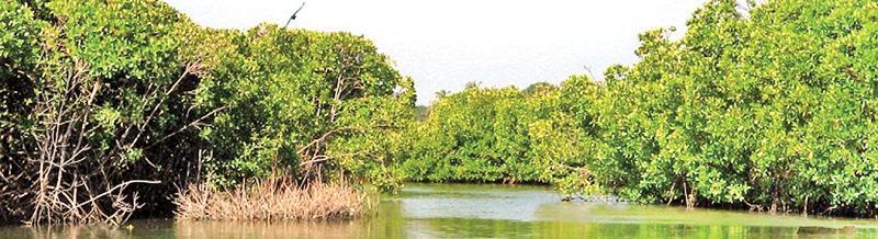 The Negombo lagoon