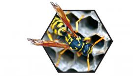 People who want to rid themselves of wasp nests should call a professional exterminator or use a commercial insect repellent, Thunder Bay Fire Rescue District Chief John Kaplanis told CBC.   (John P. Ashmore/Shutterstock)