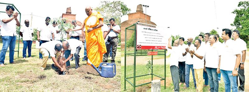 Director and CEO of Pan Asia Bank, Nimal Tillekeratne plants the first medicinal plant in the Jethavanaramaya sacred garden inaugurating the tree planting project.