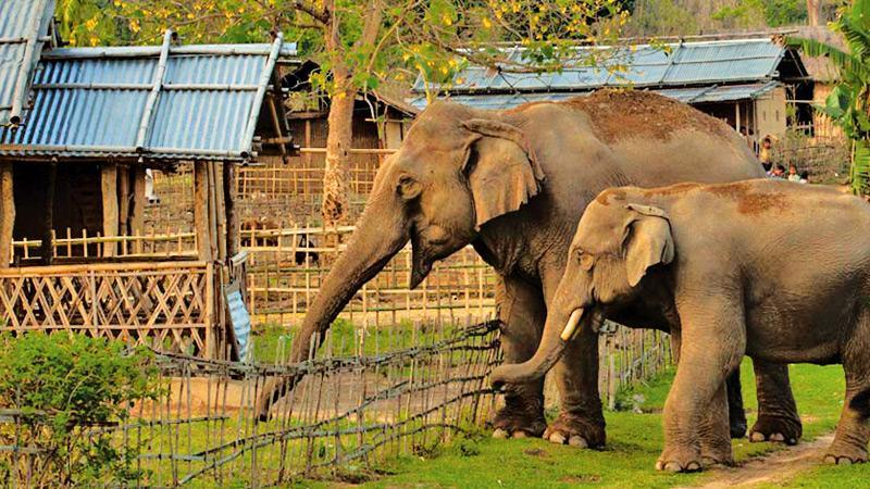 Wild elephants having invaded a tiny village